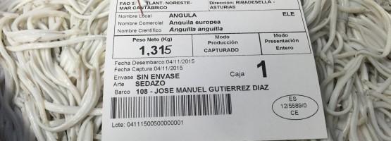 angula415